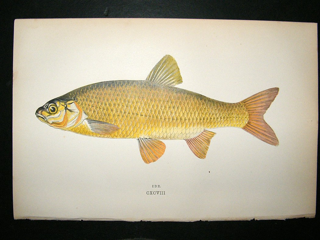 Fish images to print search results calendar 2015 for Fish pictures to print