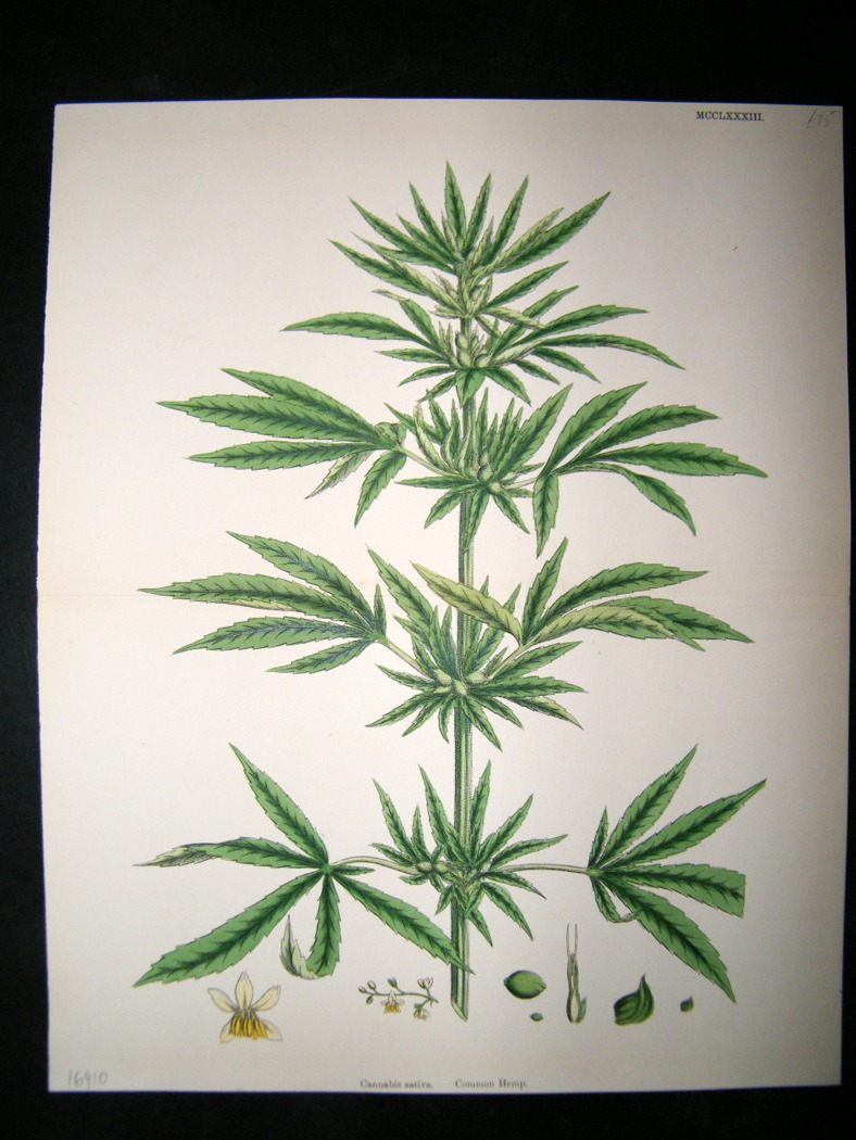 medicinal marijuana research papers The writing center at medical marijuana must be legalized for its medicinal properties o the what about it should clearly state the purpose of your paper.