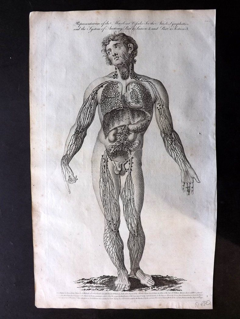 Hall 1791 Antique Anatomy Print. Representation of the Absorbent Vessels