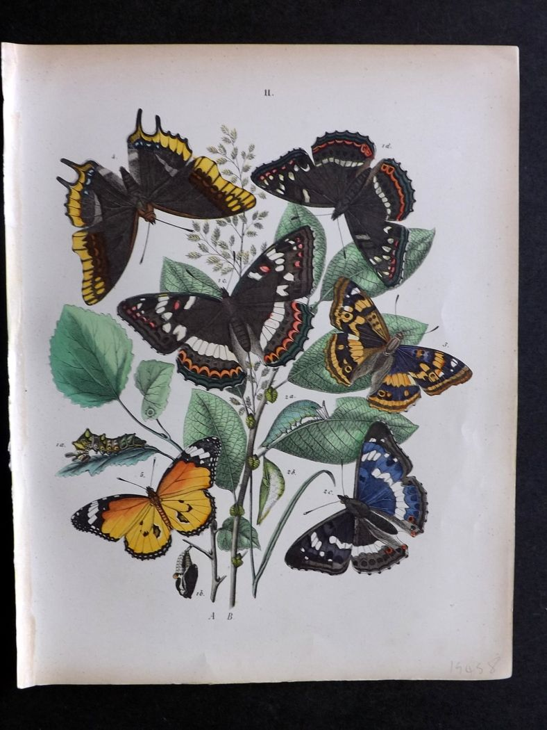 Kirby European Butterflies And Moths 1882 Hand Col Antique Print 11