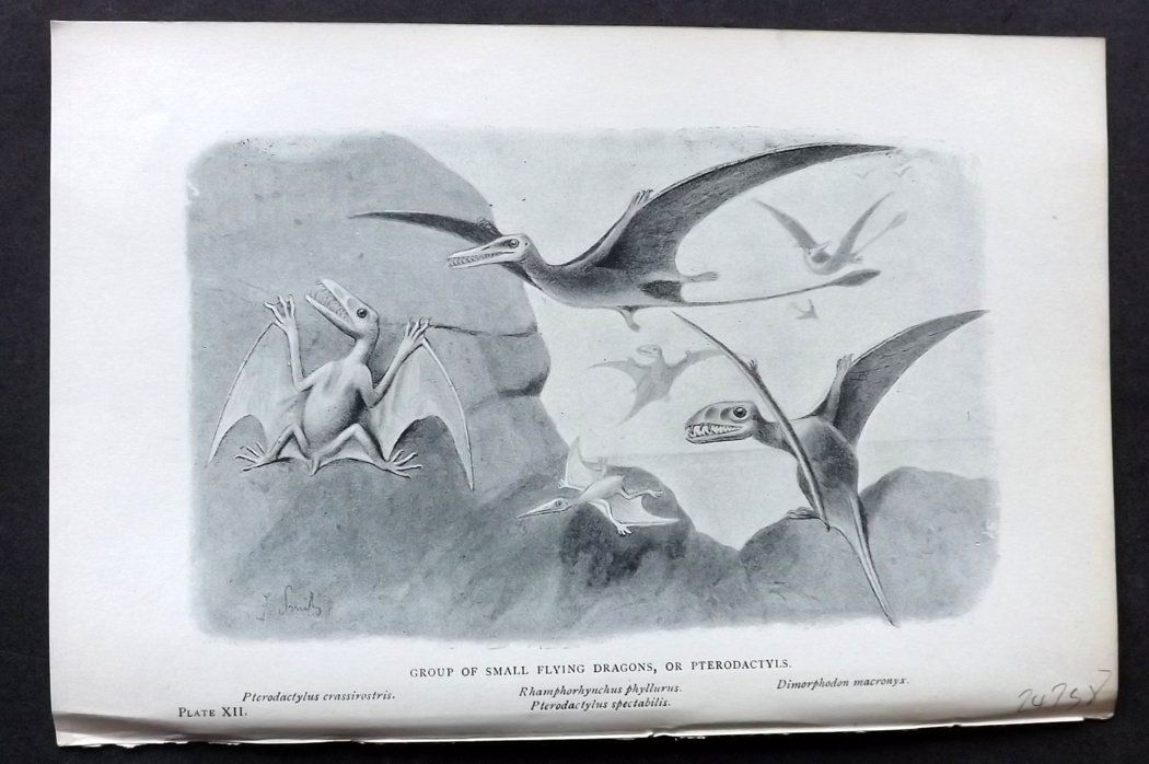 Hutchinson 1897 Antique Print. Small Flying Dinosaurs, Pterodactyls