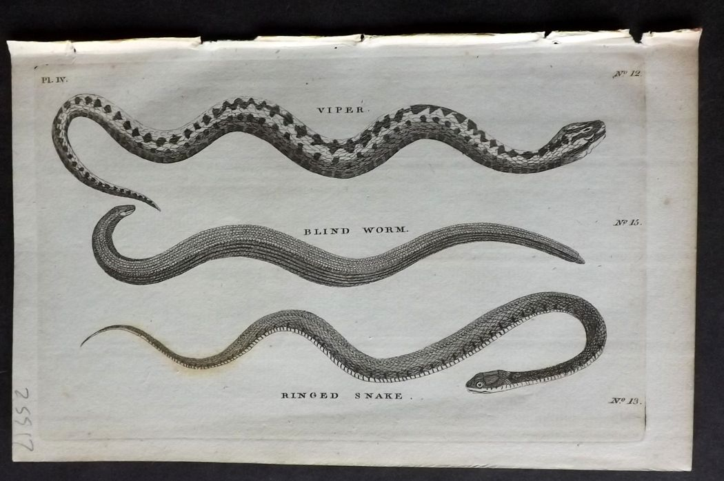 Pennant 1776 Antique Print. Viper, Blind Worm, Ringed Snake