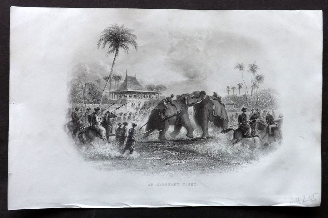 Nolan - India C1880 Antique Print. An Elephant Fight