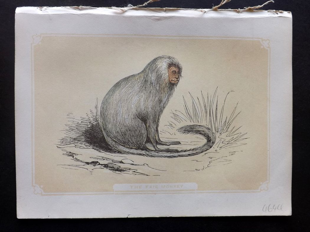 Bicknell 1851 Antique Print. The Fair Monkey