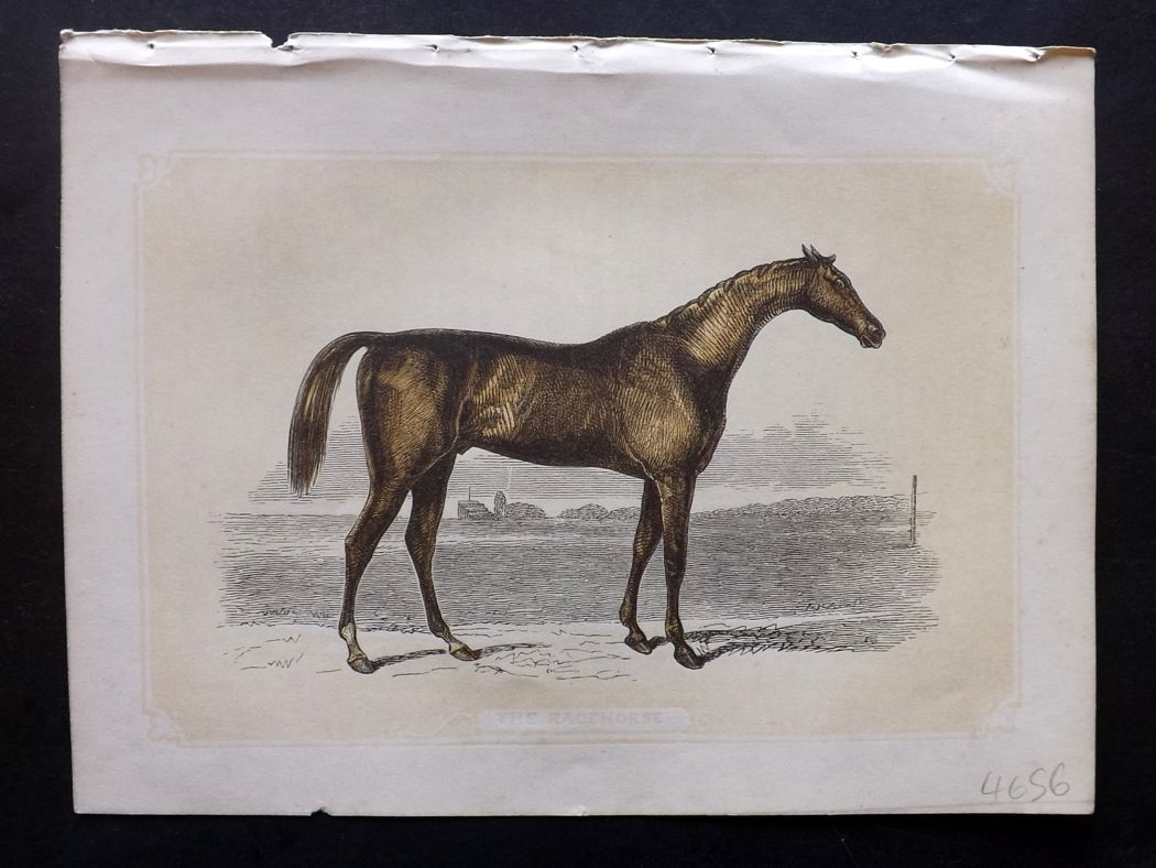Bicknell 1851 Antique Print. Racehorse