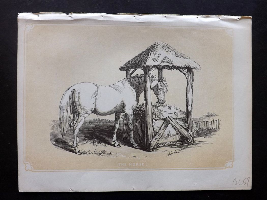 Bicknell 1851 Antique Print. Horse