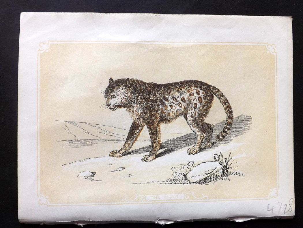 Bicknell 1851 Antique Print. Ounce